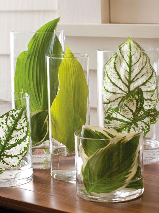 hojas en vasos - handfie