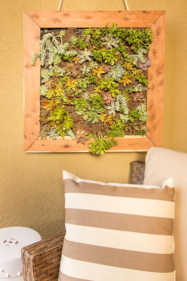 suculentas - jardines verticales