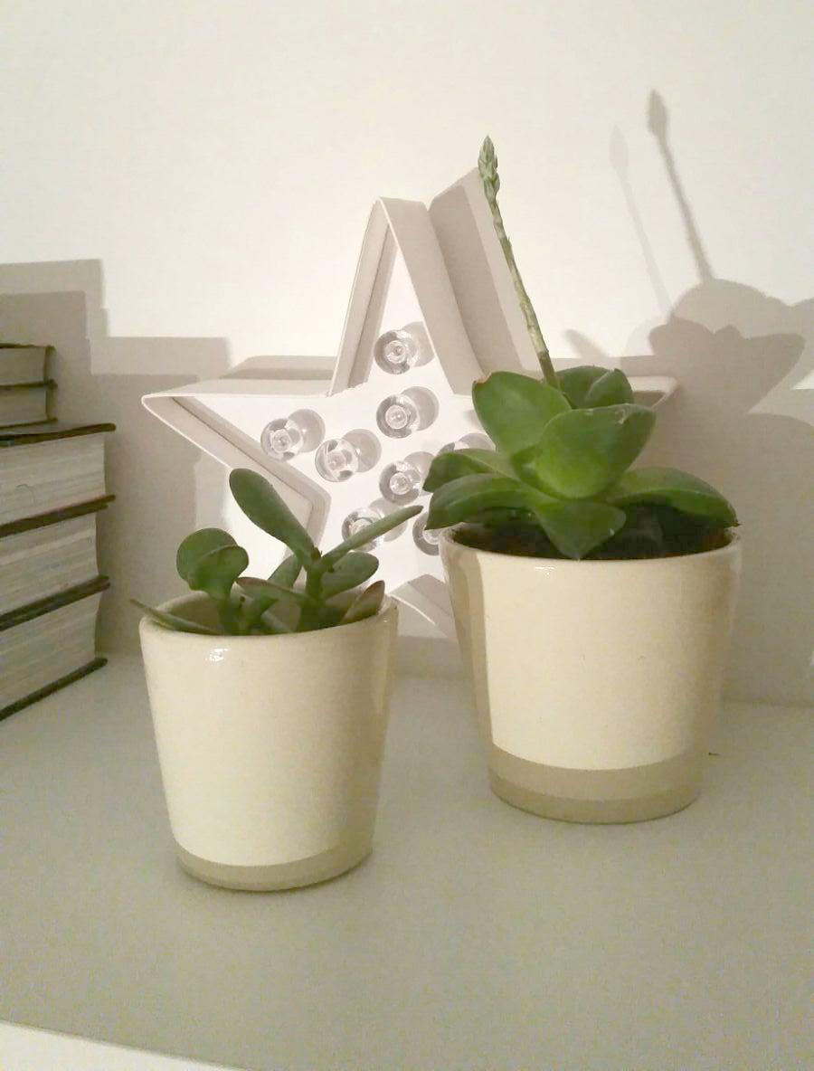 7 Plantas De Interior Resistentes Y Faciles De Cuidar Handfie - Plantas-de-interior-resistentes