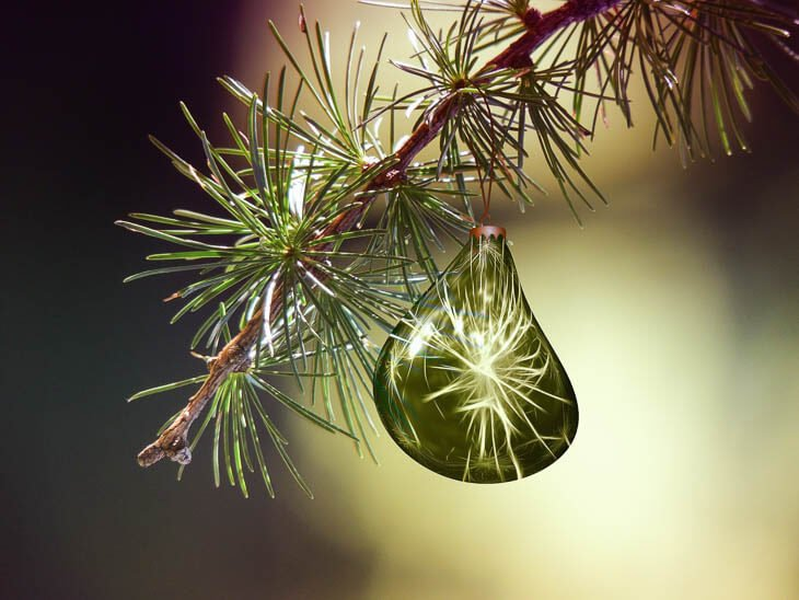 gota de agua en hojas de abeto de Navidad