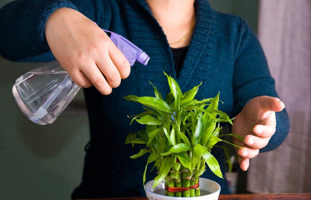 Pulverizando las plantas