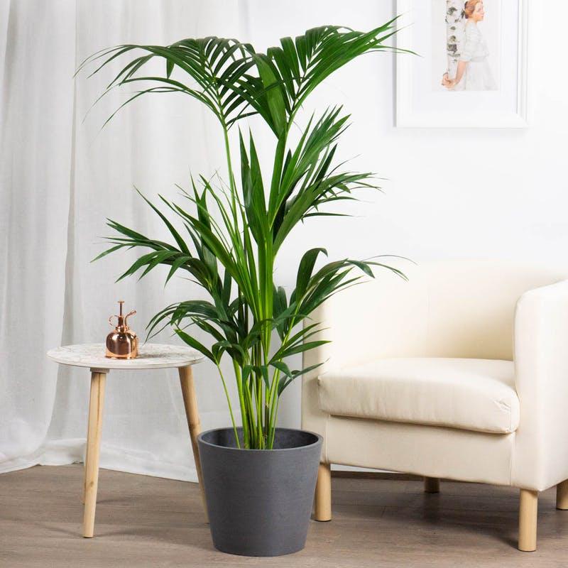 21 Plantas De Interior Resistentes Y Fáciles De Cuidar Handfie