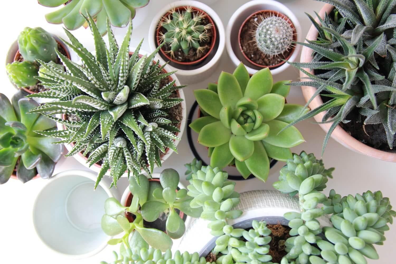 21 plantas de interior resistentes y fáciles de cuidar - Handfie