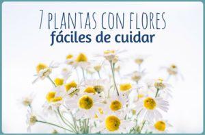 7 plantas con flores fáciles de cuidar