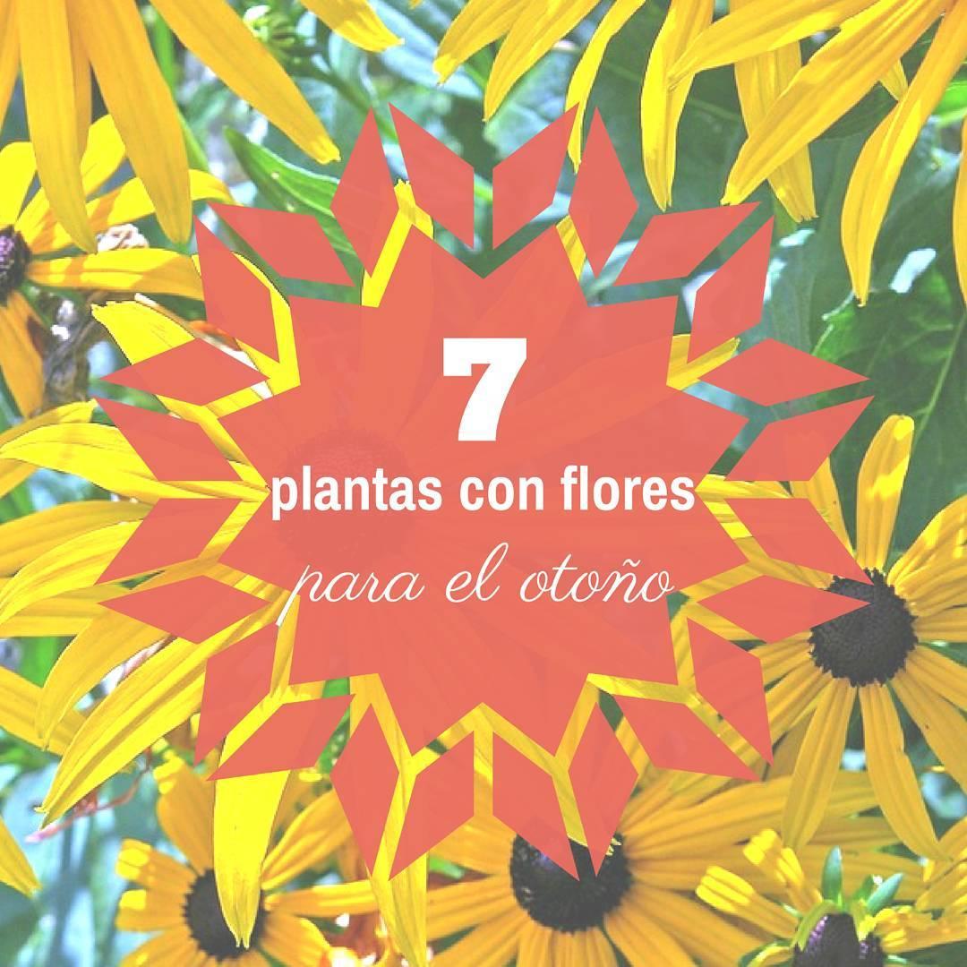 plantas con flores jardines