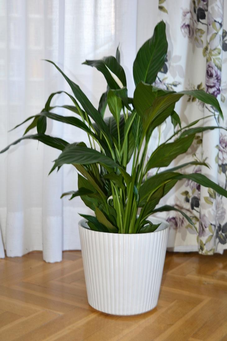 7 plantas de interior resistentes y f ciles de cuidar - Plantas para macetas exterior resistentes ...