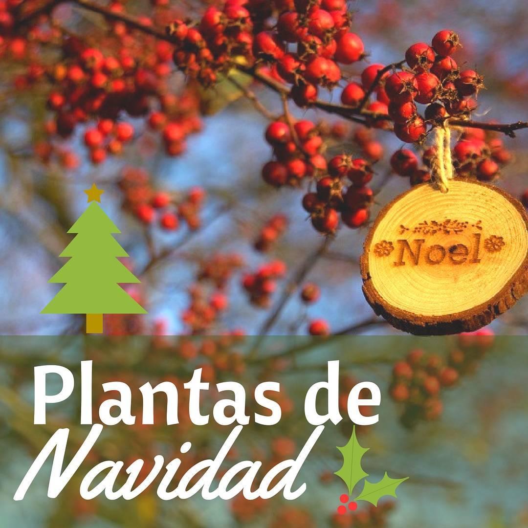 Plantas de Navidad bonitas