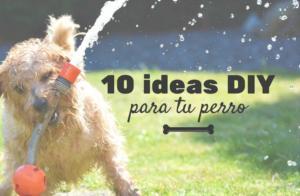 10 ideas DIY para hacer juguetes caseros para perros