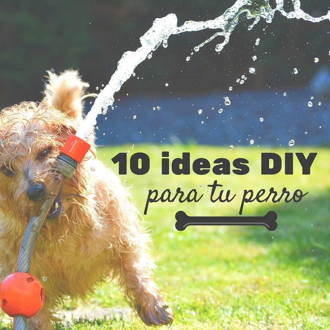 Juguetes Caseros Para Perros 10 Ideas Que Puedes Hacer Tu