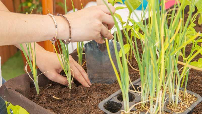 Plantas en la mesa de huerto urbano