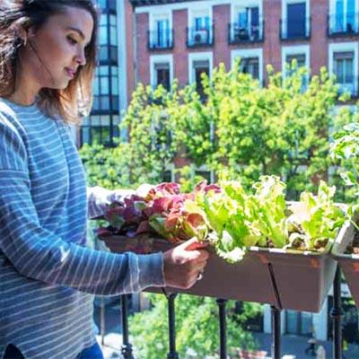 Cómo crear un huerto urbano para el balcón