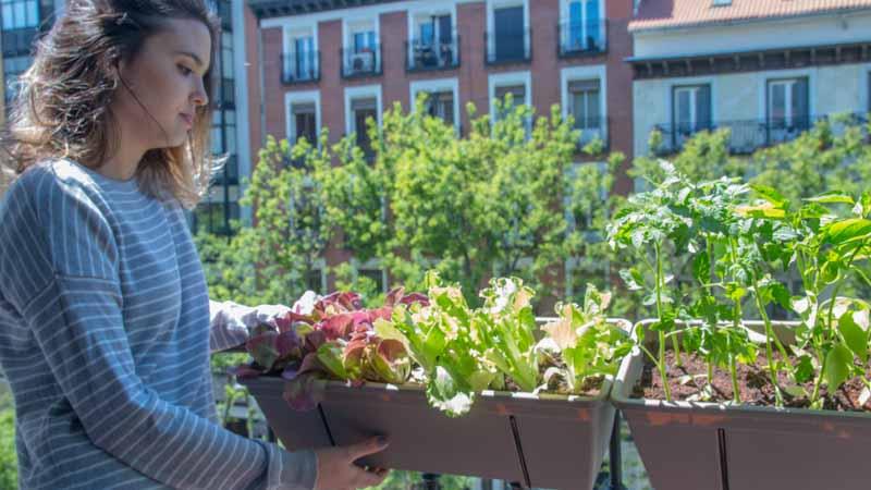 Huerto urbano para el balcón