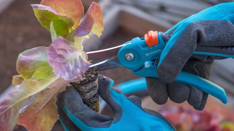 Tijeras de podar recortando las plantas antes de plantarlas