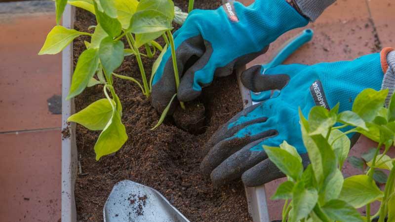 Plantas en el huerto urbano