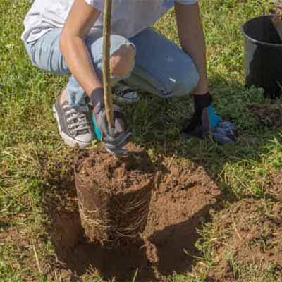 Cómo plantar un árbol en el jardín