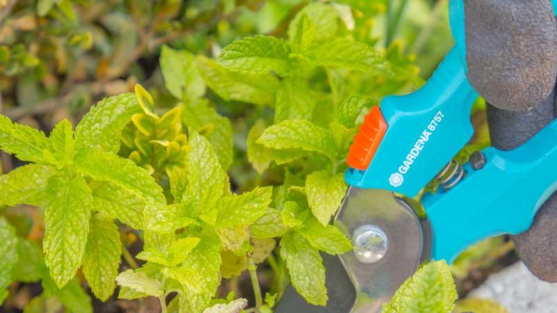 Tijeras cortando flores y plantas