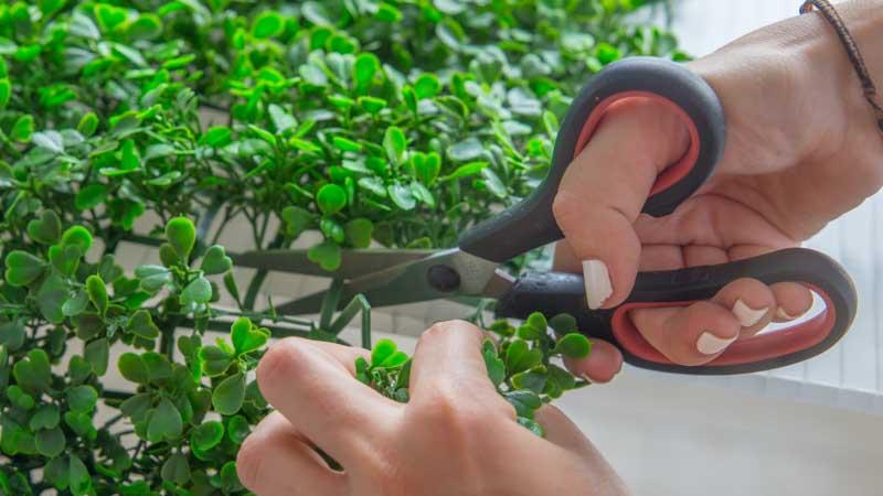 Tijeras cortando el jardín vertical