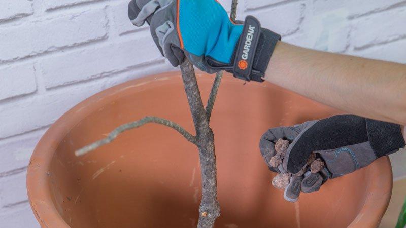 Colocación de las ramas para hacer los árboles decorativos