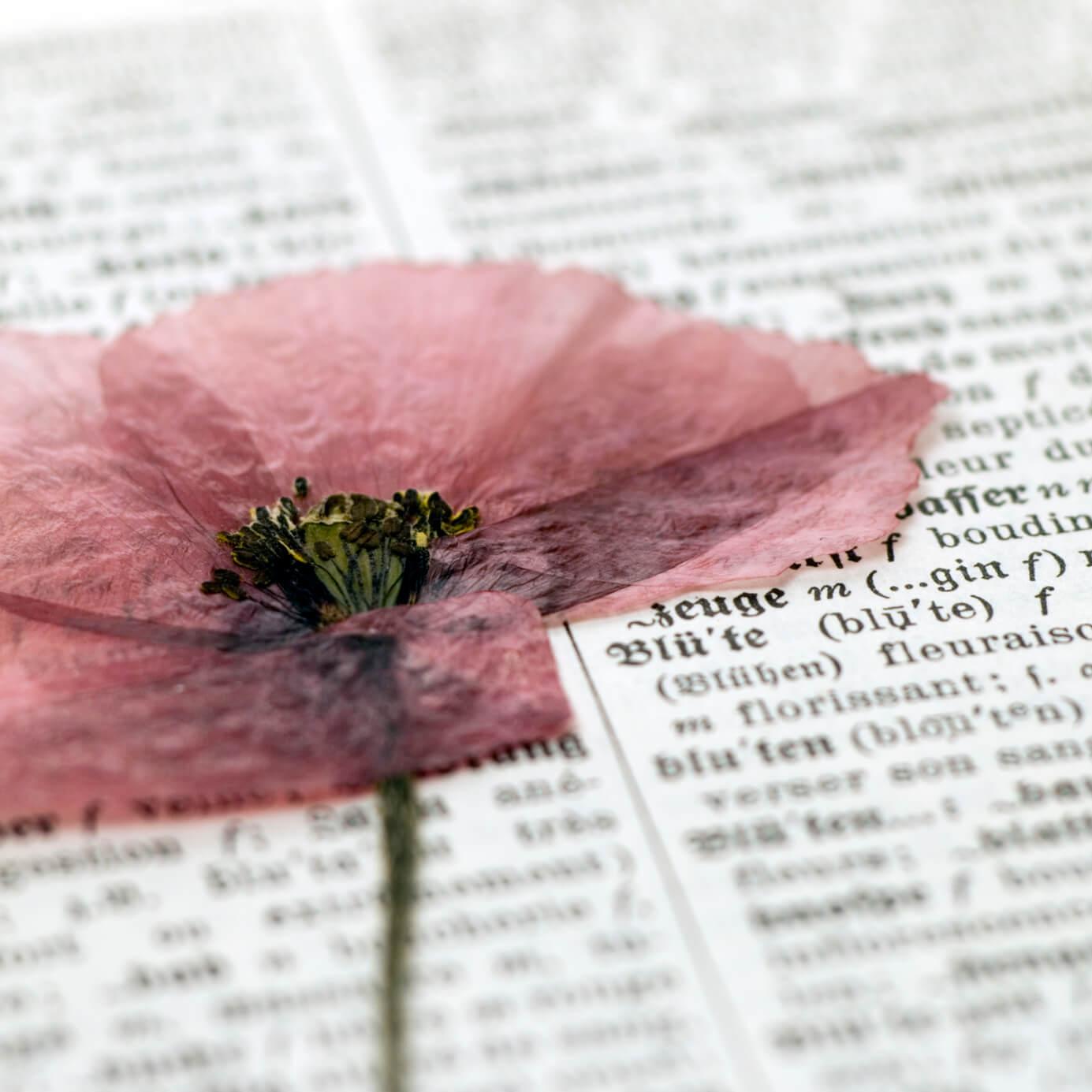 15 Ideas Diy Para Hacer Con Flores Secas Handfie Diy