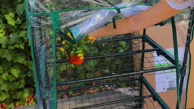 Colcoación de las plantas en el invernnadero