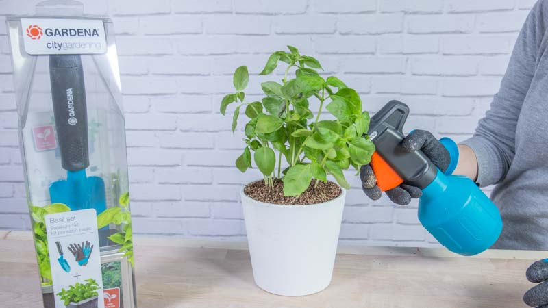 Kit para plantar albahaca de Gardena