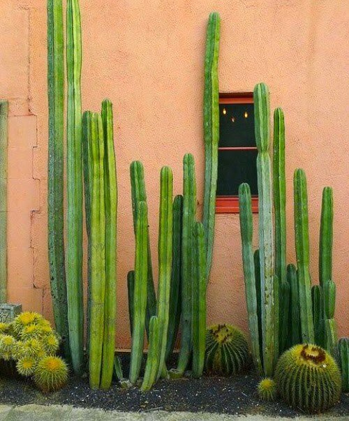 ideas_para_decorar_el_jardín_con_un_espacio_de_cactus
