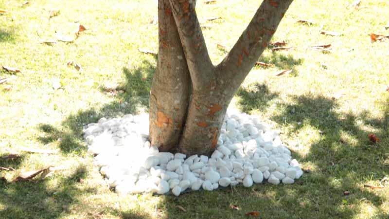 Alcorque de tronco de árbol con piedras sobre malla antihierbas