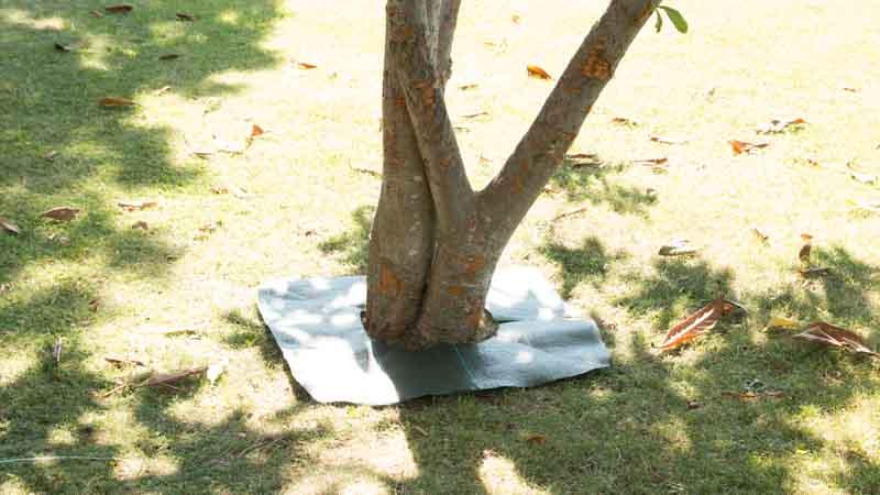 Proteger y embellecer tronco de un árbol con malla antihierbas