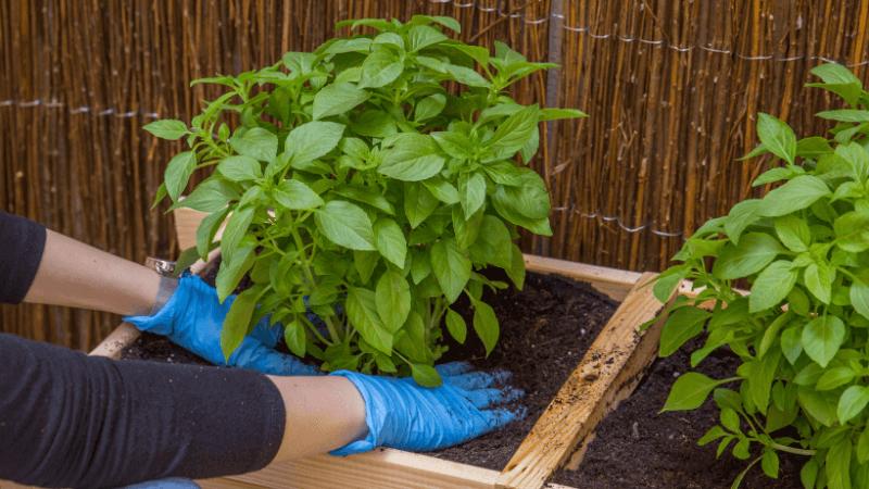 Compacta el sustrato con las plantas