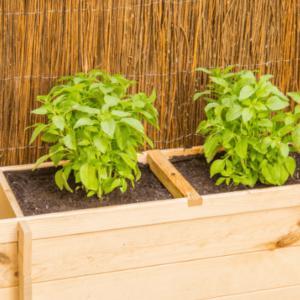 Cultivar un huerto urbano en casa