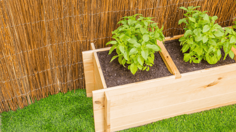 Cultivo de huerto urbano en casa