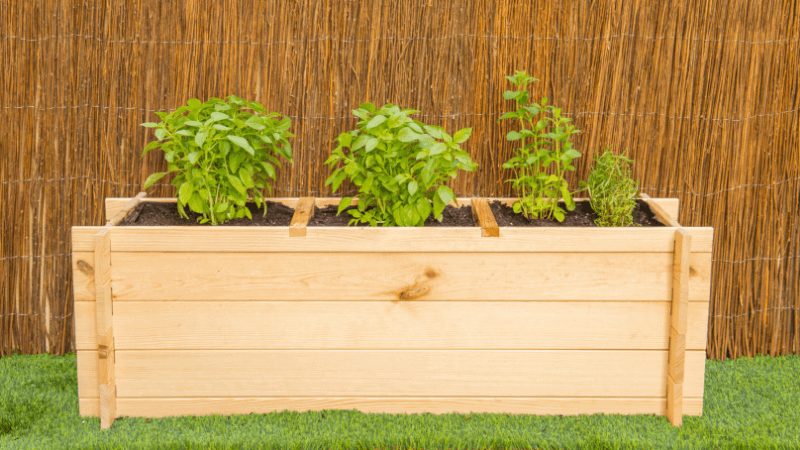 Cultivar un huerto urbano casero con aromáticas
