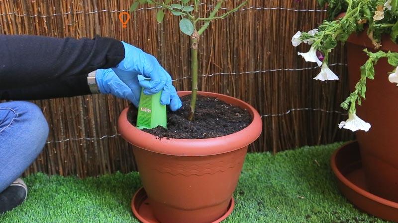 Sumerger ligeramente gel de riego Aquaplant