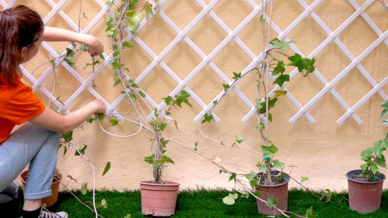 Colocar las plantas para decorar la pared de celosía.