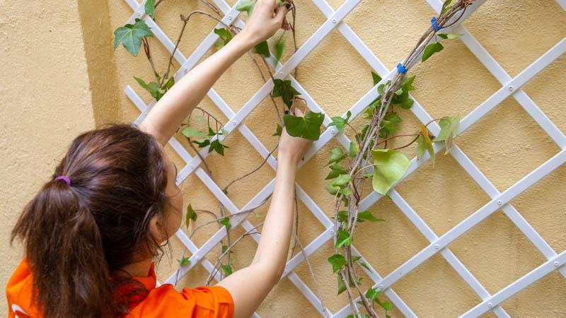Poner plantas para decorar la pared de celosía de la terraza.