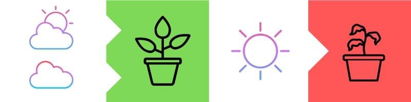 Dónde crecen las hortensias: sombra  y sol