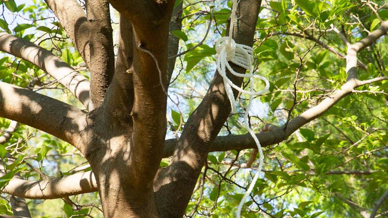 Cuerda atada al árbol