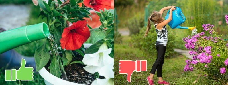 No regar hojas ni flores directamente