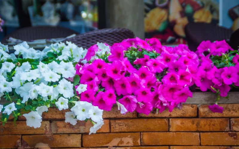 Plantas De Verano Con Flores Que Resisten El Pleno Sol
