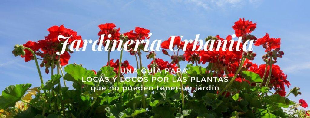 Guía sobre plantas de verano que resistan sol: Jardinería Urbanita Handfie