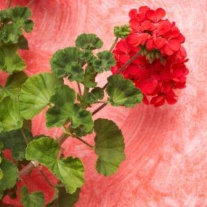 Plantas de verano resistentes al sol directo