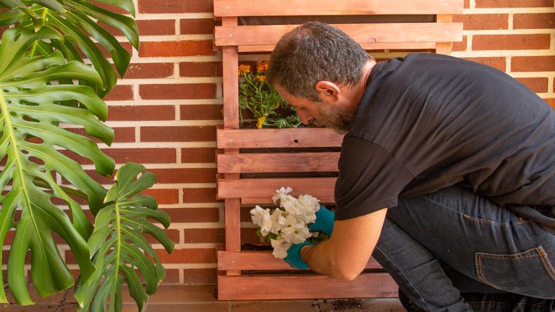 Colocar plantas
