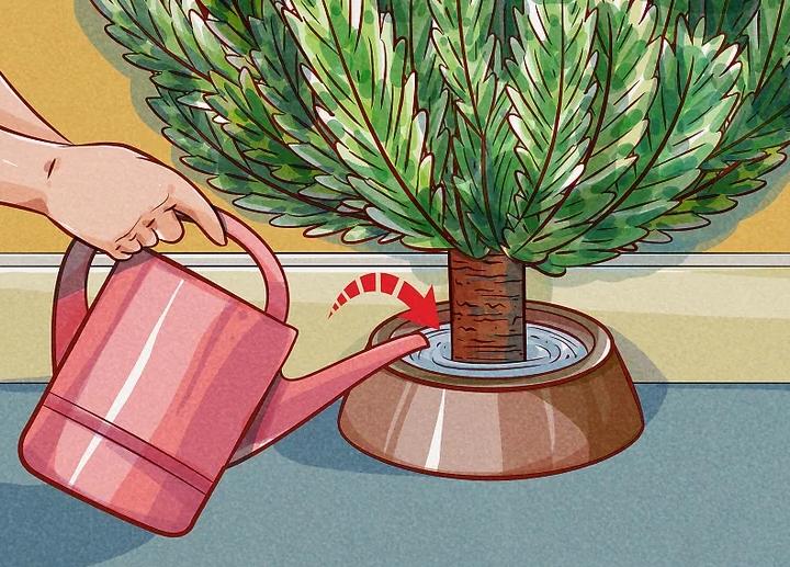 Regado de los árboles de Navidad naturales