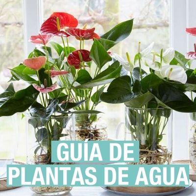 Guía sobre las plantas de agua