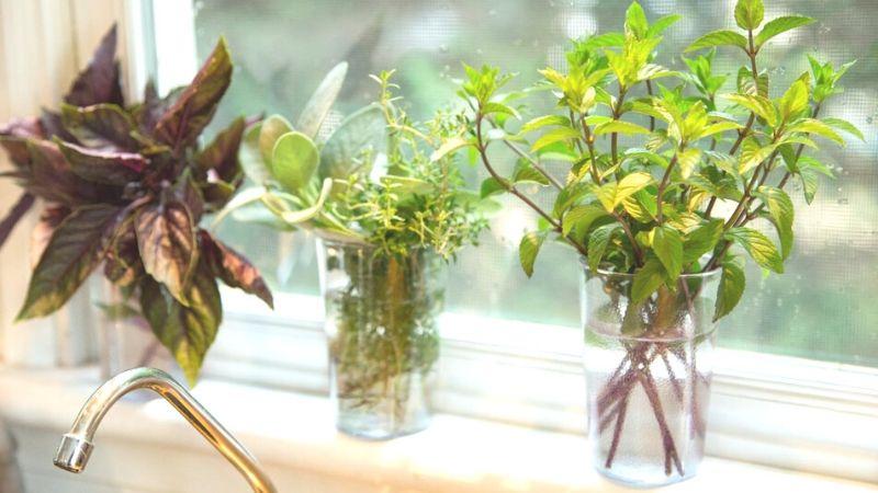 Hierbas aromáticas en agua