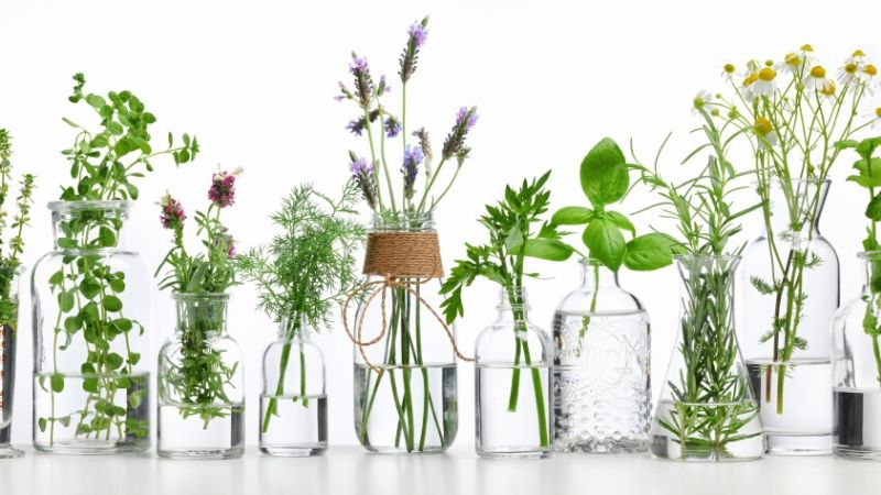 Plantas cultivadas en agua