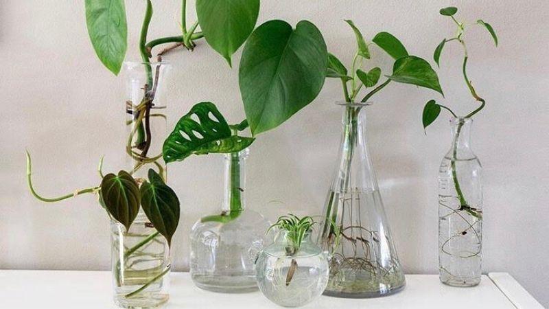 Diferentes recipientes para las plantas de agua