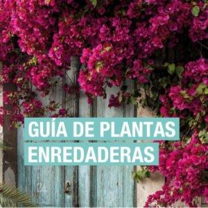 Guía de plantas enredaderas