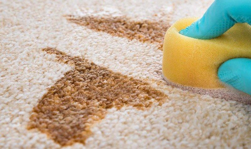 Mano con guante de látex azul limpia con esponja una mancha de una alfombra de color crudo