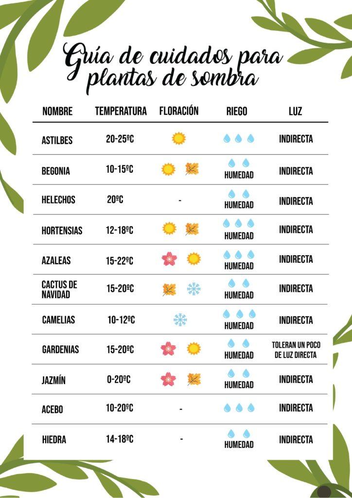 Infografía de cuidados para plantas de sombra